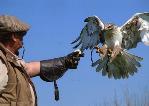 Private Falconry Walk