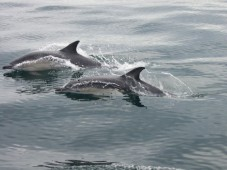 Dolphin and Whale Watching in West Cork