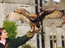 Bird of Prey Experience - 60 minutes