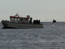 Whale and Dolphin Watching Weekend for Two